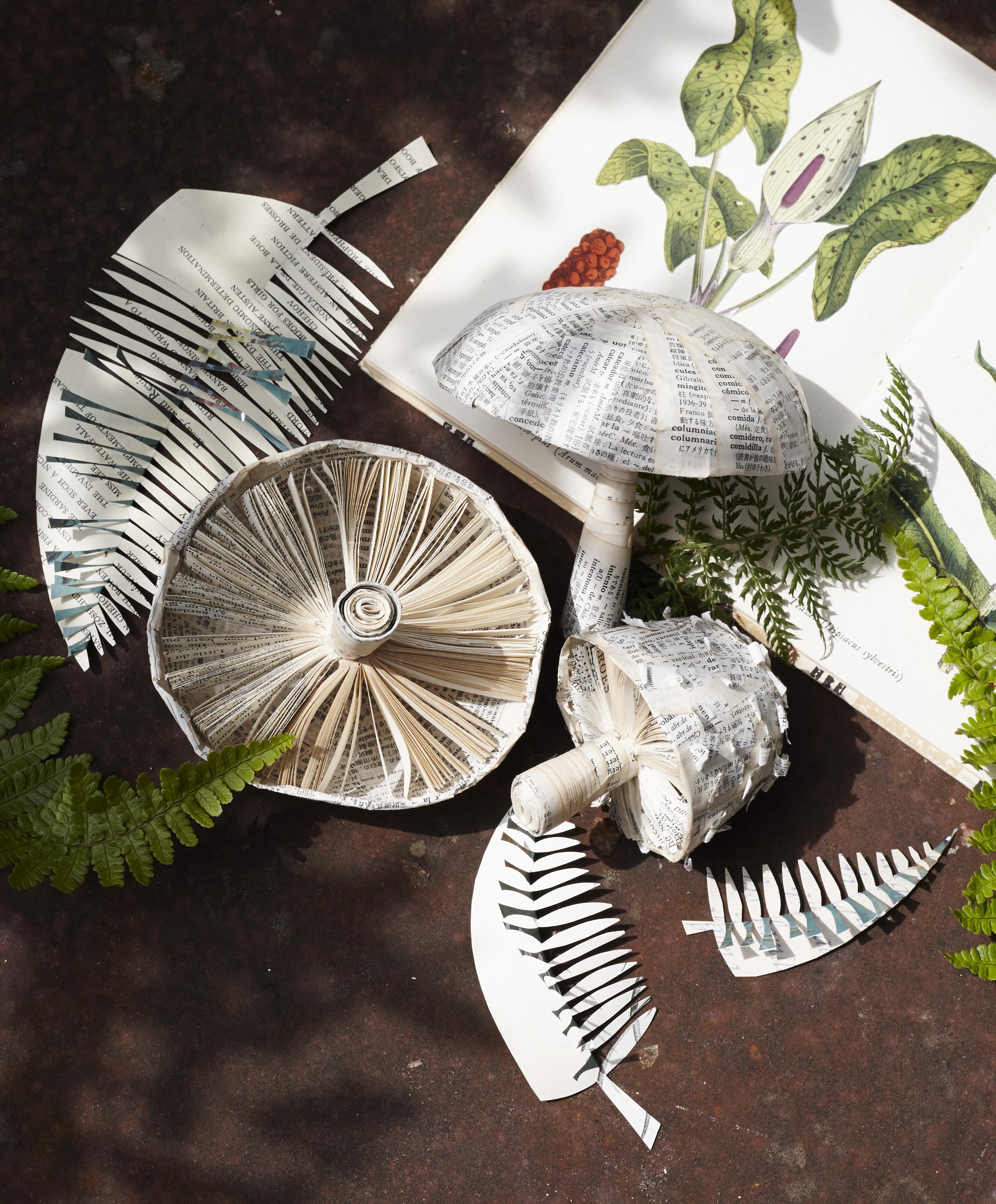 Mushrooms & Ferns.jpg